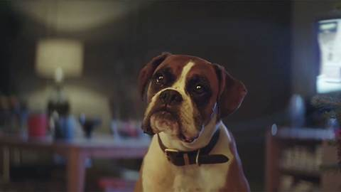 John Lewis: Buster the Boxer