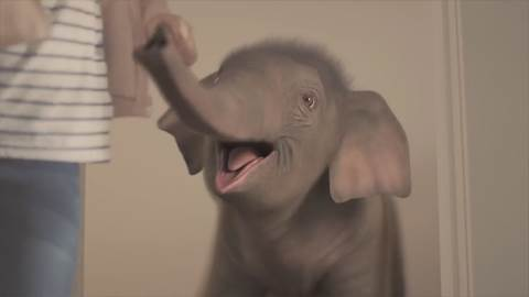 soak.com-Tully-the-elephant